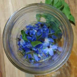 borage flower tincture preparation