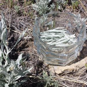 prairie mugwort essence
