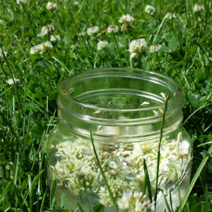 white clover essence